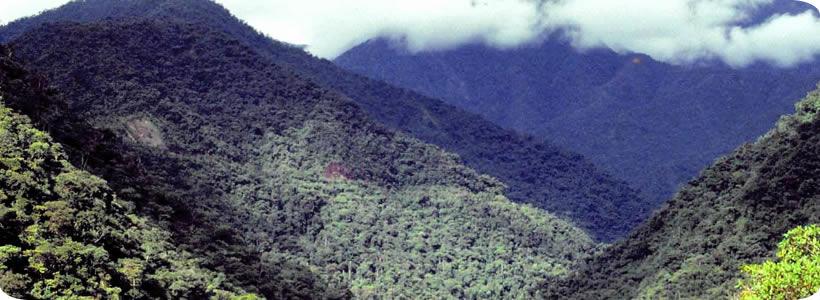 Peru Manu-national-park-peru